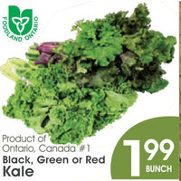 Black, Green Or Red Kale